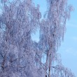 Frozen Tree — Foto Stock