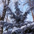 Frozen Tree — Stock Photo #35622435
