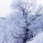 Snowy Winter Landscape — Stock Photo #35622477