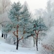 Snowy Winter Landscape — Stock Photo #35622481
