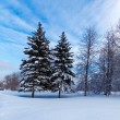 Snowy Two Pine Trees — Stock Photo
