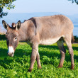Cute Donkey — Photo