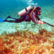 Stock Photo: ScubDiver with Spear Gun