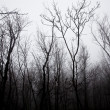 Mystrious foggy forest in winter - Lizenzfreies Foto