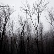 Mystrious foggy forest in winter - Foto Stock