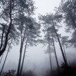Mystrious foggy forest in winter — Stock Photo #14000262