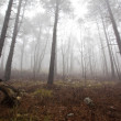 Stock Photo: Mystrious foggy forest in winter