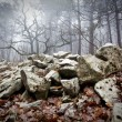 Mystrious foggy forest in winter — Stock Photo #14000301