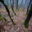 Mystrious foggy forest in winter — Stock Photo #14000306