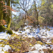 Winter forest — Stock Photo #14001551