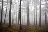Mystrious foggy forest in winter — Stock Photo