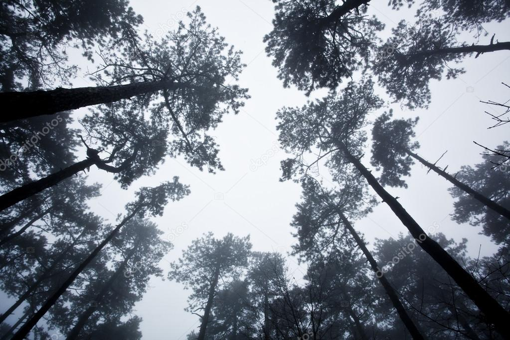 Mystrious foggy forest in winter — Stock Photo #14000272