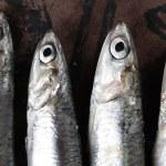 Sardines close up — Stock Photo #14072918