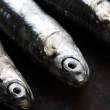 Sardines close up - Stock Photo