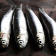 Sardines - Stock Photo