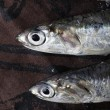 Sardines close up — Stock Photo #14072982