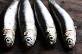 Sardines close up — Stock Photo