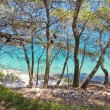 Beautiful maritime pine on the sea, rocky beach, croatia — Stock Photo