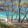 Beautiful maritime pine on the sea, rocky beach, croatia - Stock Photo