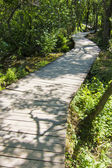 Wooden path through forest. in krka national park, croatia — Stock Photo