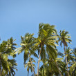 Beautiful palm trees against blue sunny sky — Stok fotoğraf