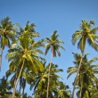 Beautiful palm trees against blue sunny sky — Stock Photo