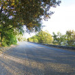 Stock Photo: Panoramic view of a road in the forest