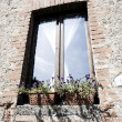 Window with flower in tuscany — Stock Photo