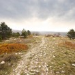 Path in the kars woods in autum — Stock Photo