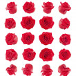 Stock Photo: Set of red roses flowers composite