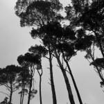 silhouette mystérieuse Forêt brumeuse en hiver — Photo