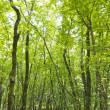 Forest trees background. nature green wood sunlight. — Foto Stock