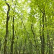 Forest trees background. nature green wood sunlight. — Stockfoto