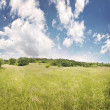Grass field and blue sky, summer lanscape — Stock Photo