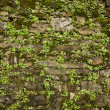 Stone wall background with plants — Stock Photo