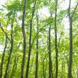 Forest trees background. nature green wood sunlight. — Stock Photo