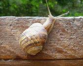 Snail on a tree — Stock Photo