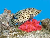 Fish and a coral — Stock Photo