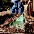 Stock Video: Raking leaves.