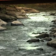 A calm flowing stream in the countryside — Vídeo de stock