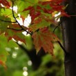 Autumn leaves blowing gently in the wind on a rainy Fall day — Stock Video #13669143
