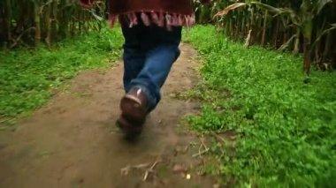 A little girl walks through a corn maze — Stock Video