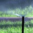 Stock Video: Lawn sprinkler.
