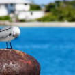 A bird suns itself on a pier. - Stock Photo