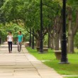 Students meet and walk on a college campus. — Stock Video