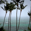 Tropical Storm Palm Trees — Stock Video #19311481