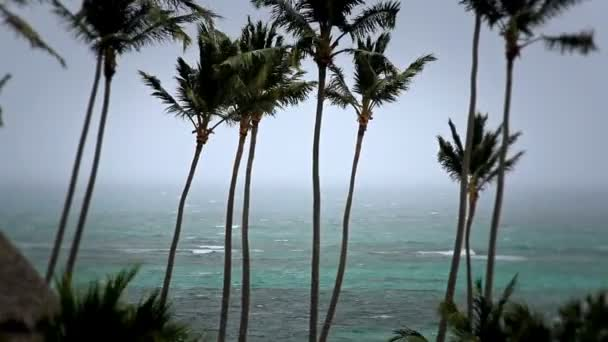 Tormenta tropical palmeras — Vídeo de stock
