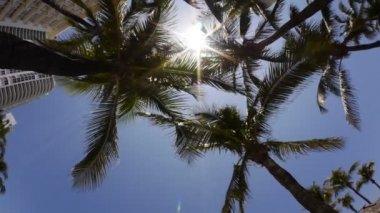 Miami-palmeiras — Vídeo Stock
