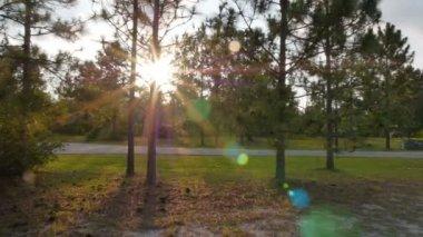 Sosnowego drzewa słońca — Wideo stockowe