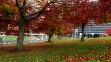 Pittsburgh Park Walk — Stock Video